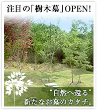 注目の「樹木墓」OPEN!