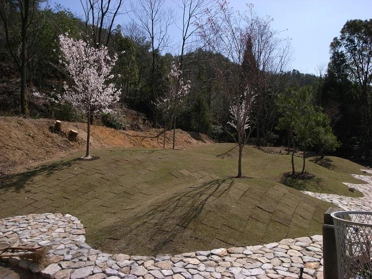 広島 樹木葬 紅葉